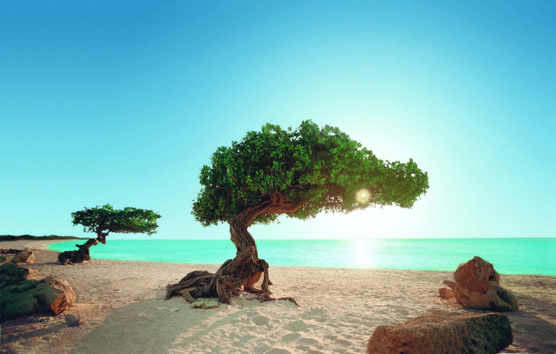 Divi-Divi-Baum Aruba (Quelle TUI Crusises)
