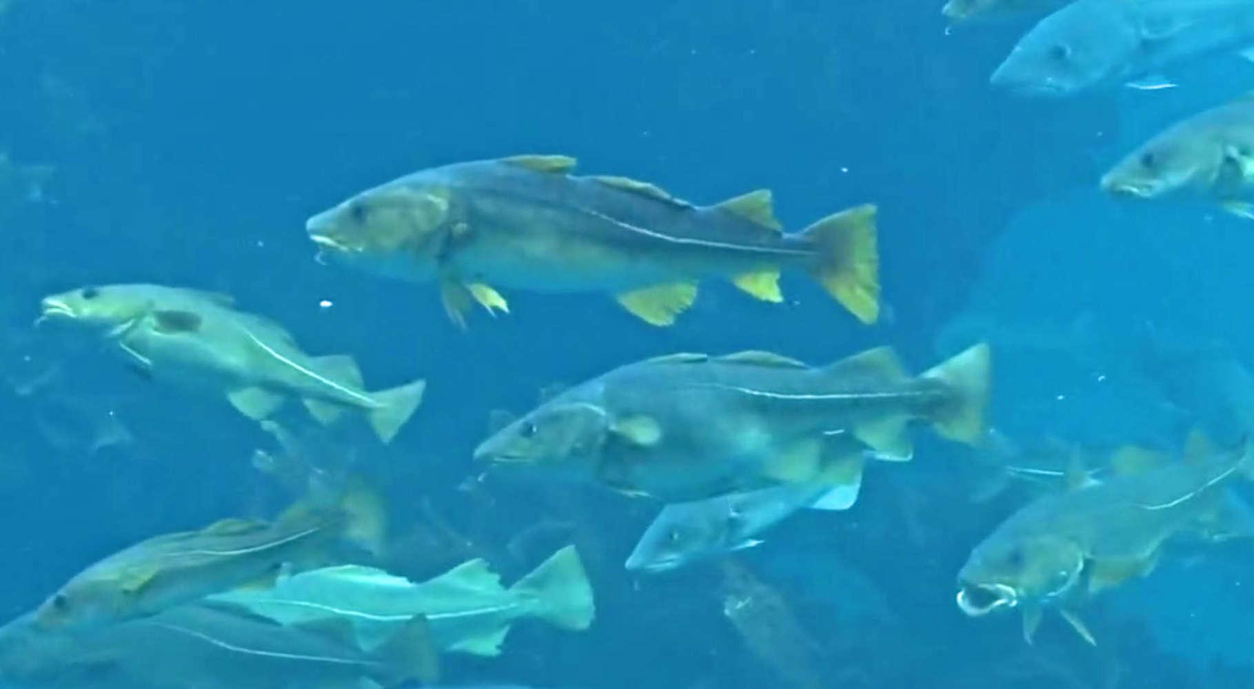 Vorbeiziehende Fische