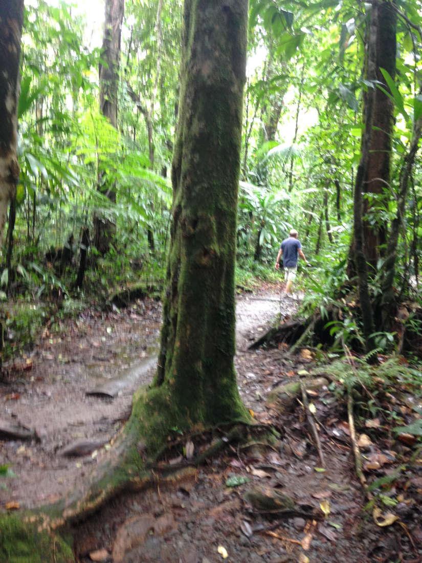Ab durch den Regenwald