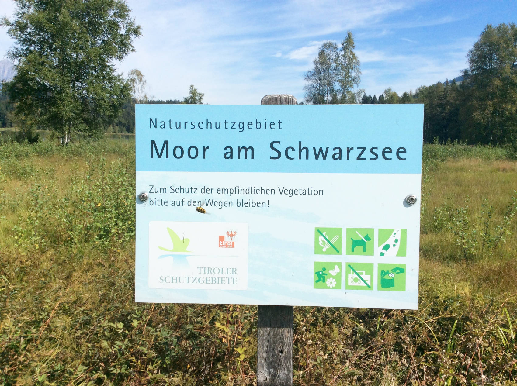 Das Moor am Schwarzsee